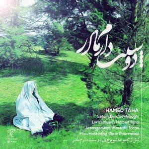 Hamed-Taha-Madar-e5a1134caebc1ca4ee98875f4b436317